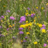 wild-flower-meadow-3386014_960_720